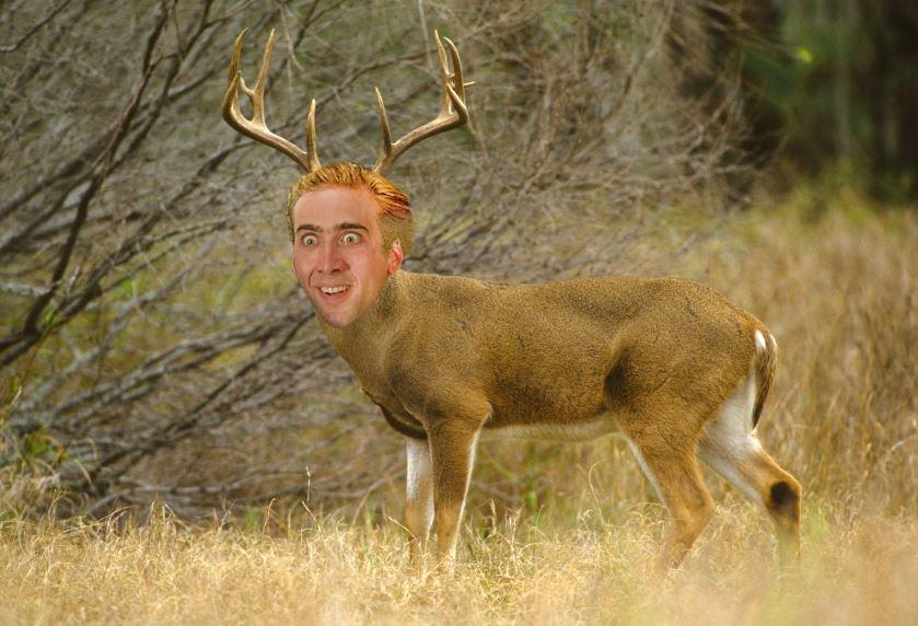 Nic Cage Deer