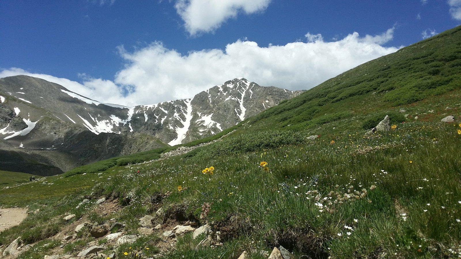 Summer at 14000 ft