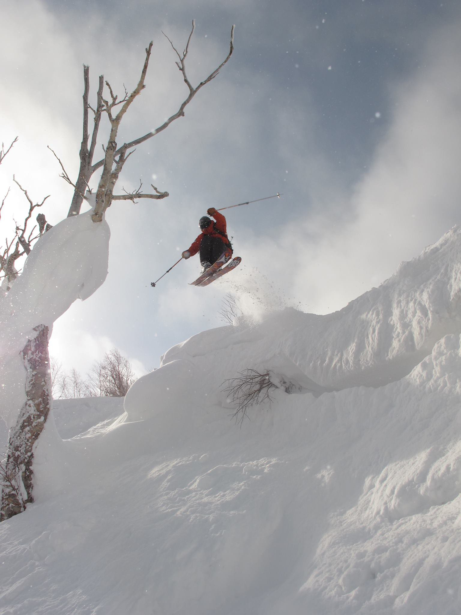Tree Tapper off the Cornice