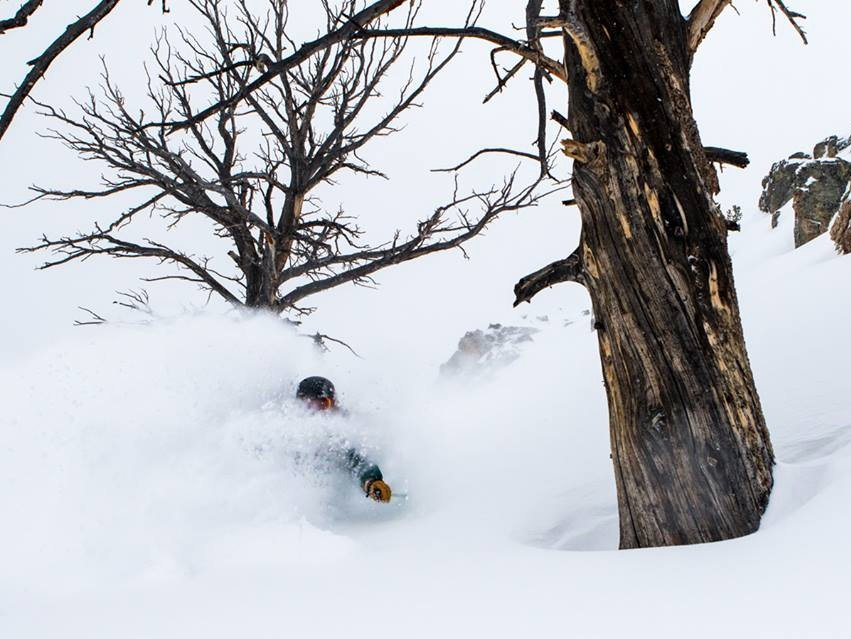 POWDER ALERT: TETONS