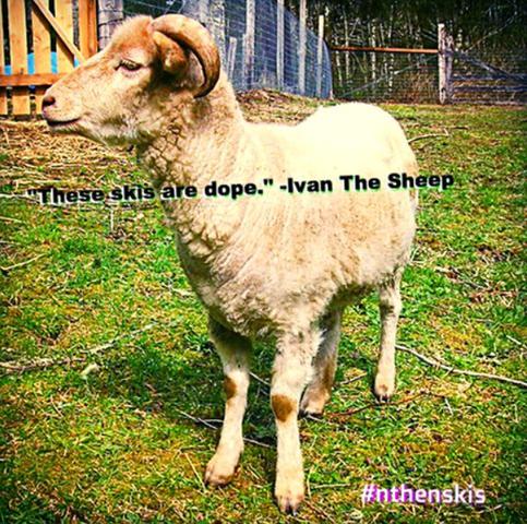 N Then Skis Sheep Ivan