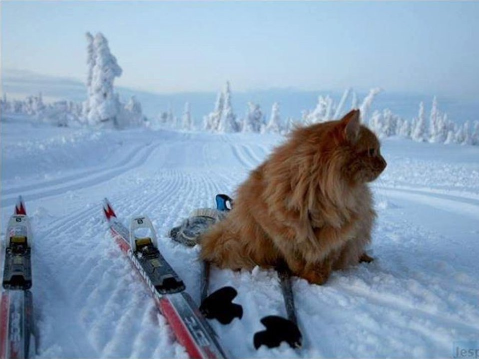 Meet Jesperpus: The Skiing Kitty
