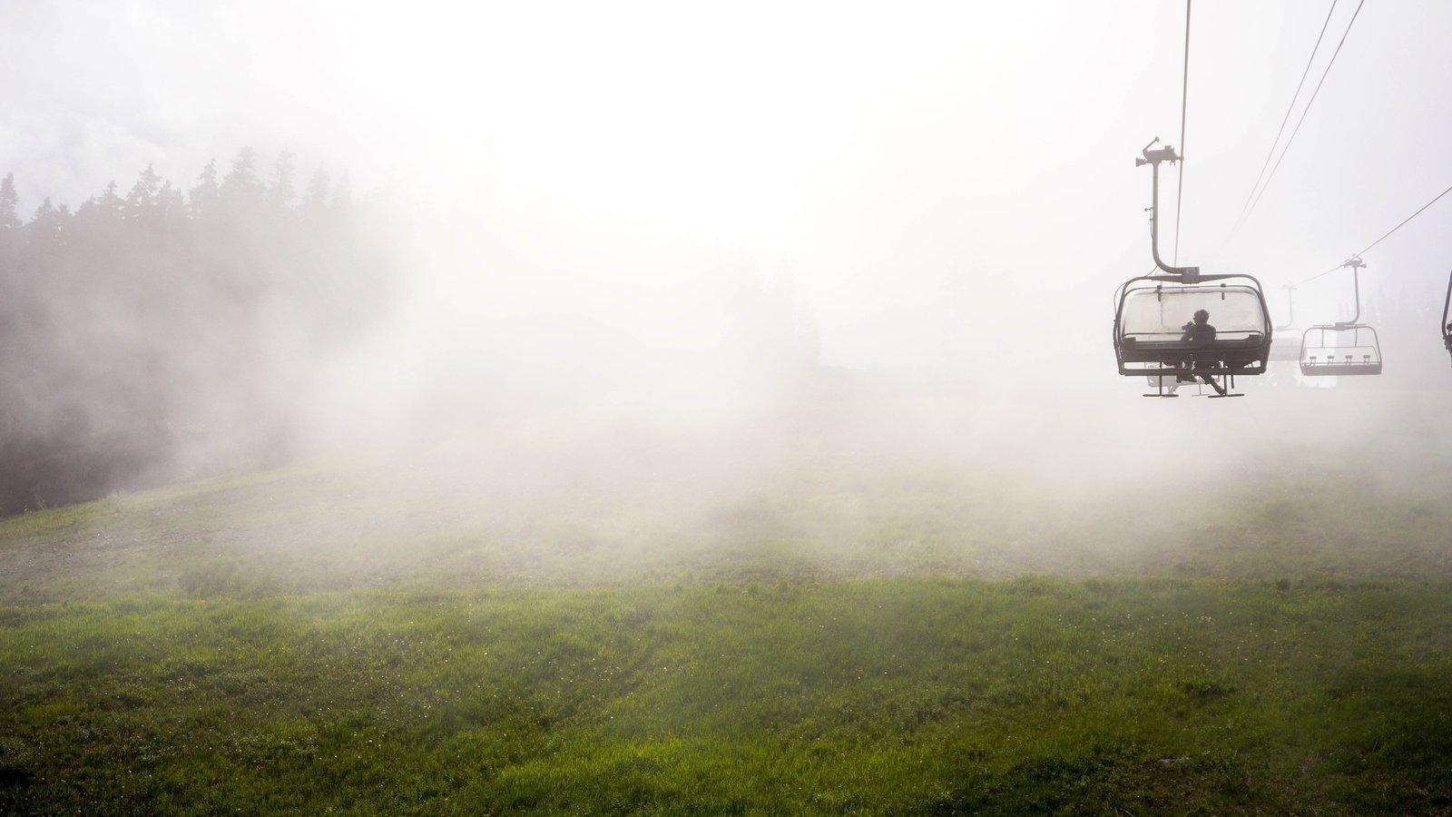 Fog ya