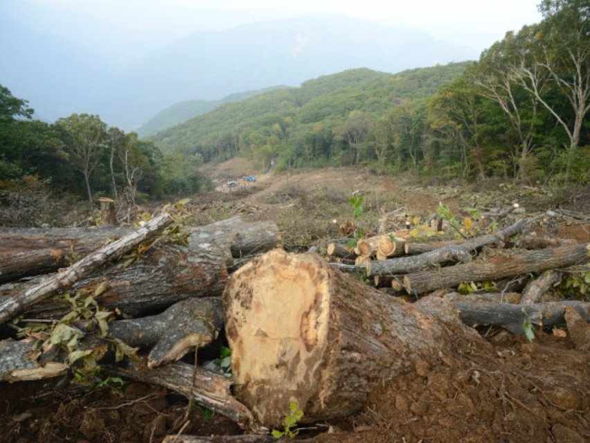 Forest Wiped Out for 2018 Olympics