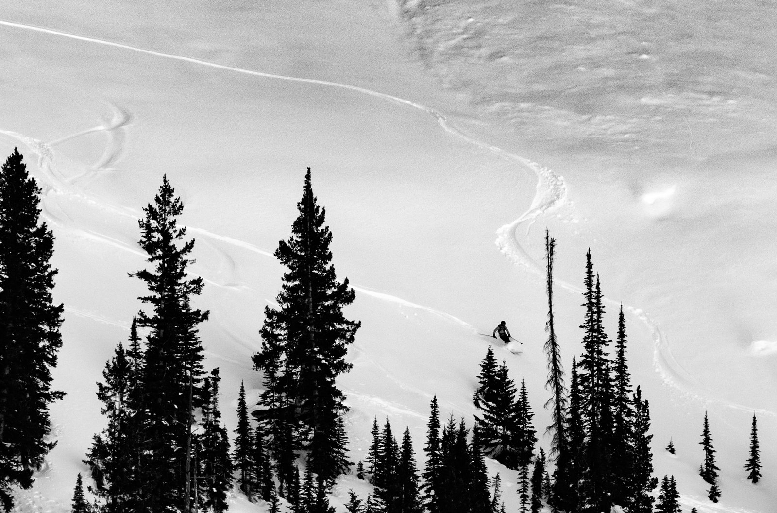 Treeskiing the Idaho Backcountry