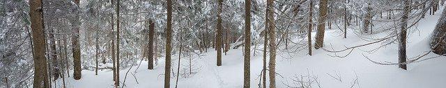 Powdered Glade Skiing