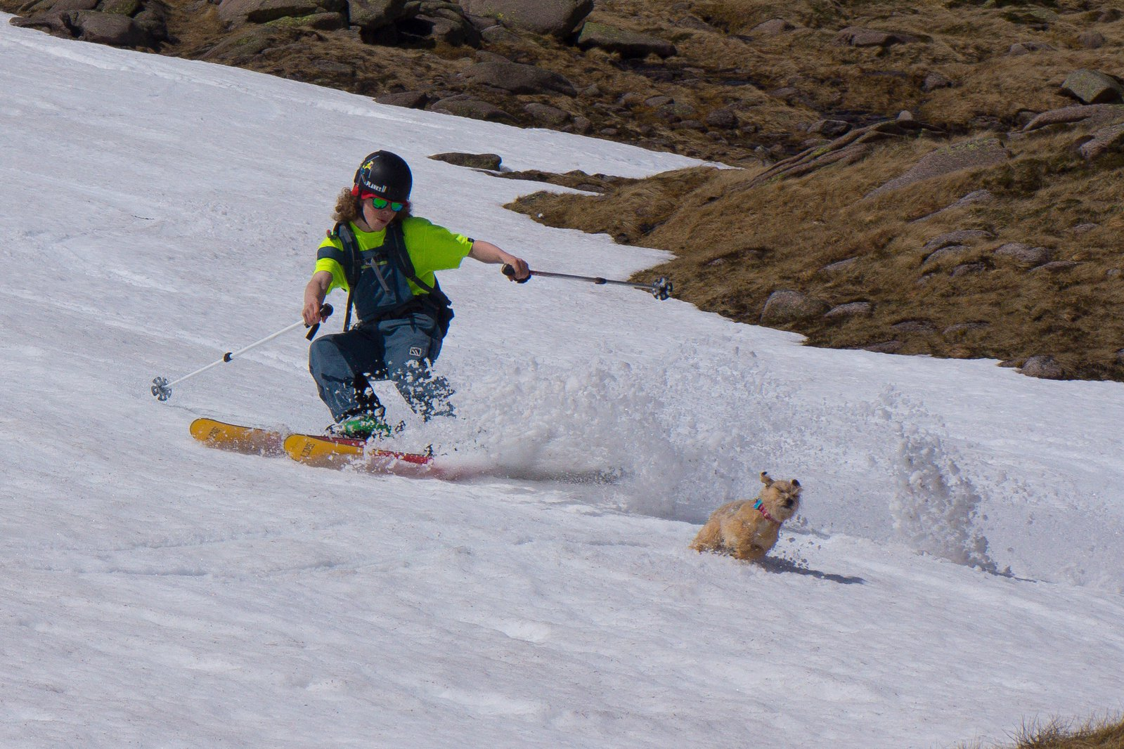 Doggo loves the spring shred