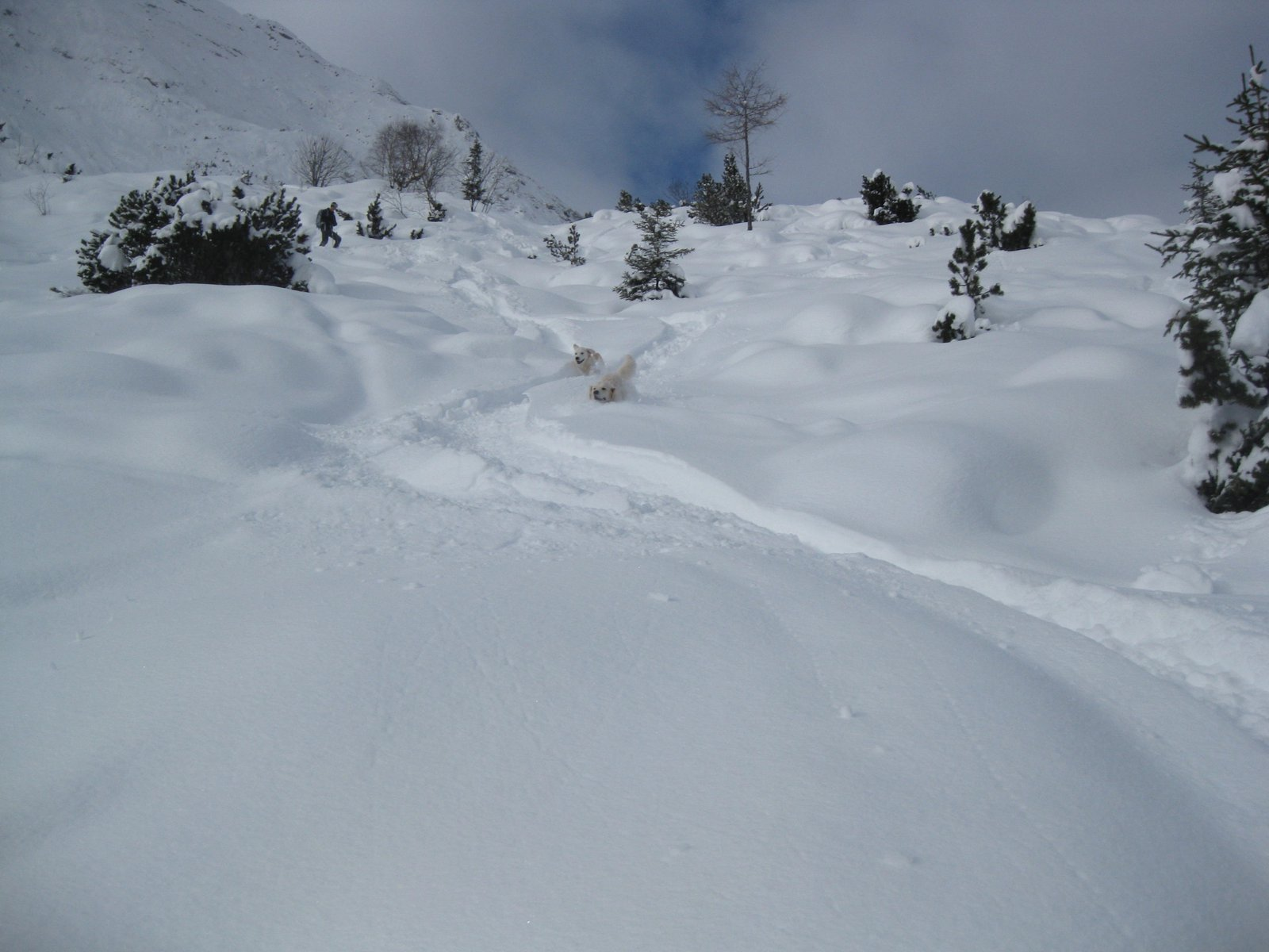 Two powder hounds!