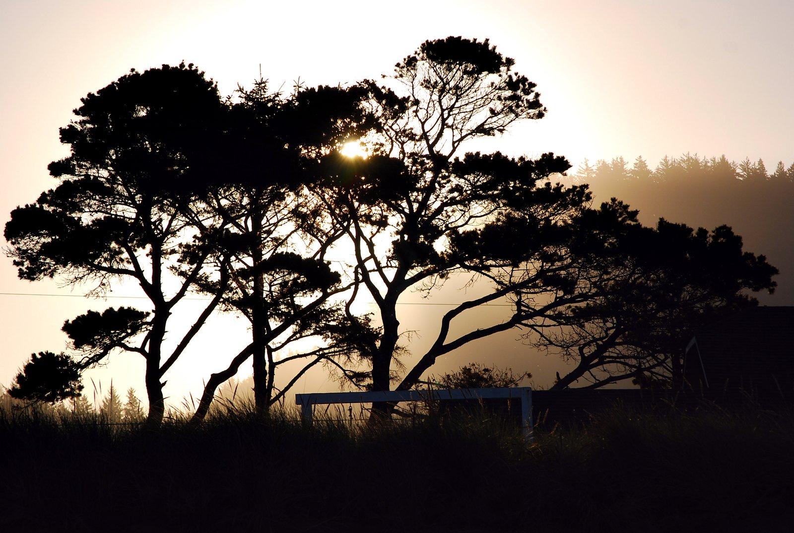 Random Sunrise in Oregon