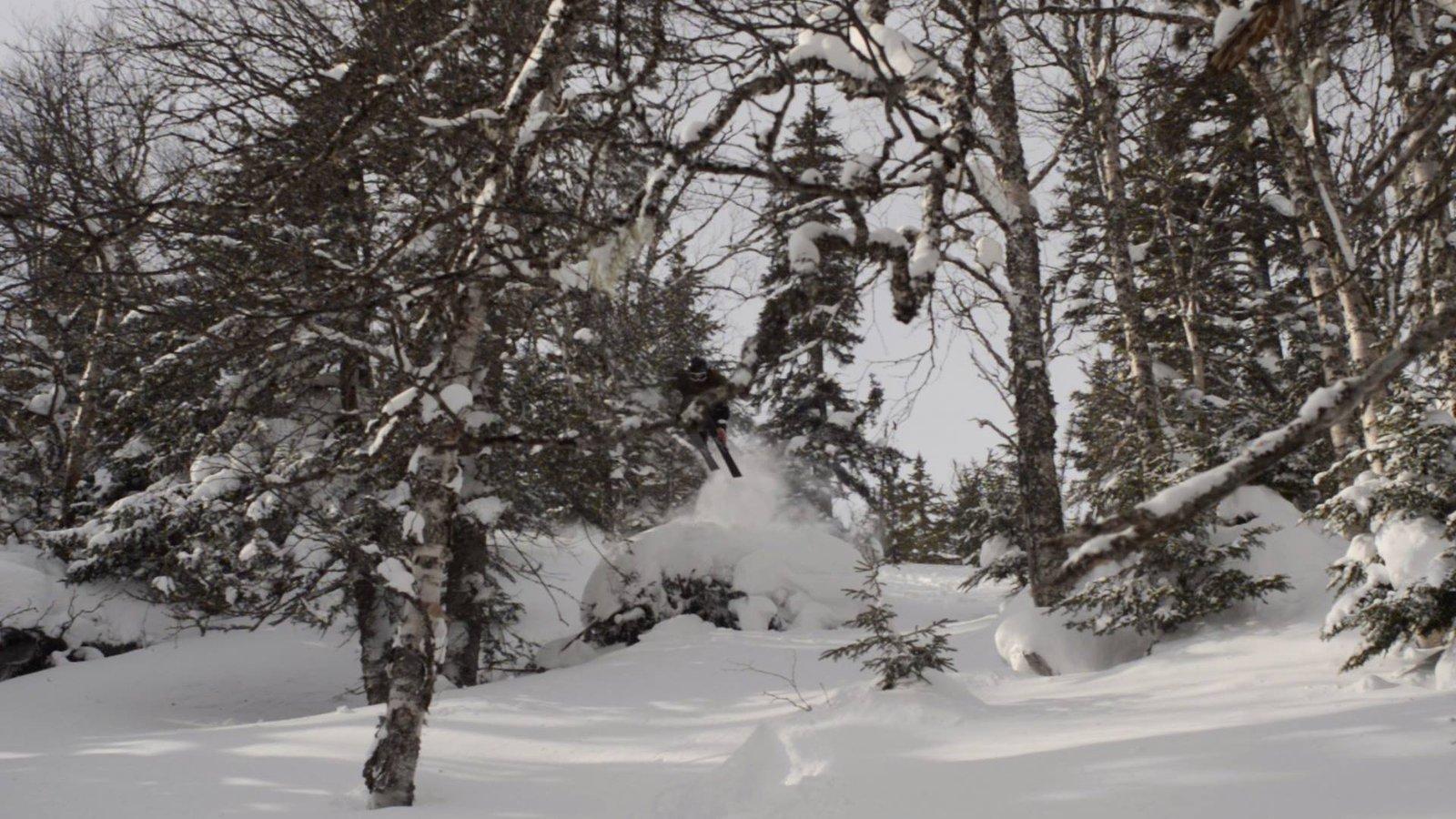 Croucher's trees